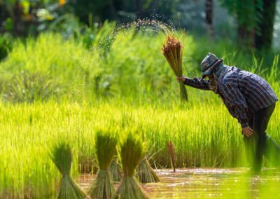 Climate-Resilient Rice Commercialization Sector Development Program – Feasibility study and piloting for Weather Indexed Crop Insurance (WICI) Scheme